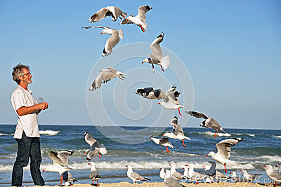 A Man alone on the beach feeding seagulls by hand.
