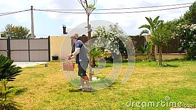 Man att gödsla gräsmattan av hans trädgård med röda kulor (4K)