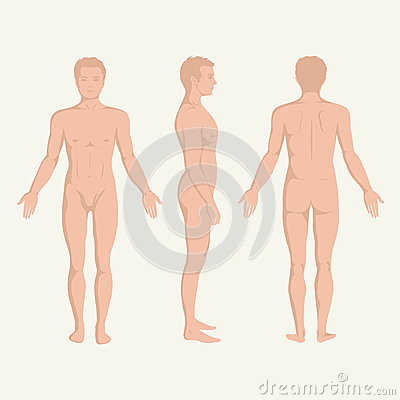 Free Man Body Anatomy, Front, Back And Side Royalty Free Stock Photo - 36186885