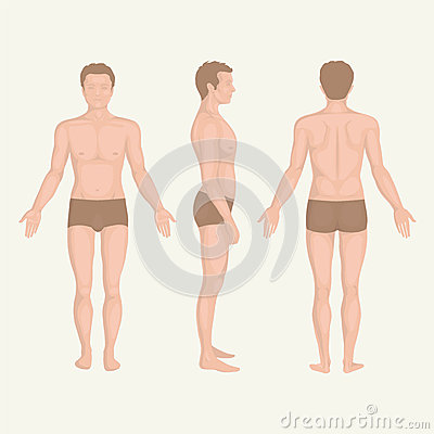 Free Man Body Anatomy, Front, Back And Side Royalty Free Stock Photo - 36186945