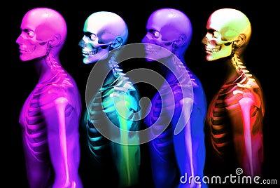 Man Bone 24