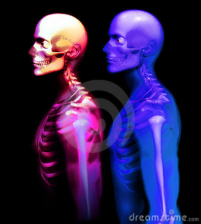 Free Man Bone 28 Stock Photos - 1651053