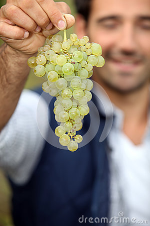 Man with bunch of grapes