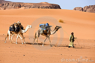 A man with camels, Lybia Editorial Photography