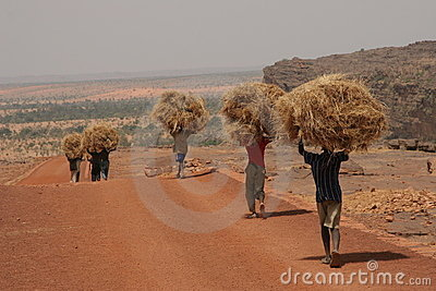Man carrying hay in Africa Editorial Photography