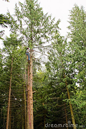 Man climbing a tall tree