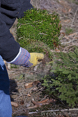 Man collecting moss