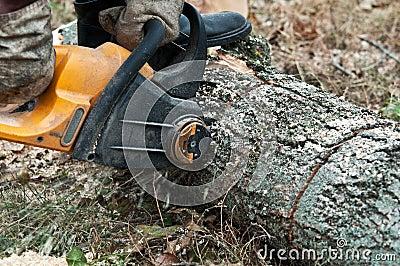Man cuts wood
