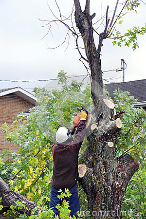 man cutting tree royalty free stock photo image