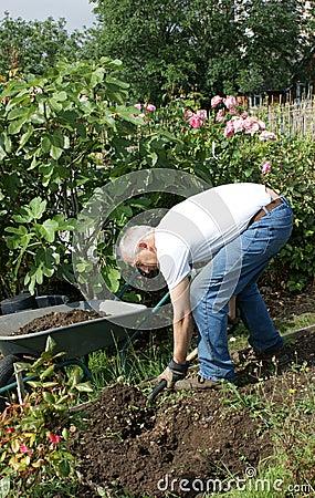 Man digging his allotment