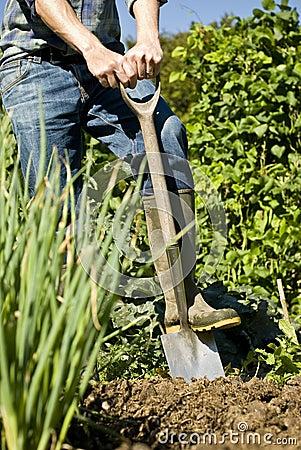 Man digging in vegetable garden