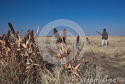 Man and dog bird hunting