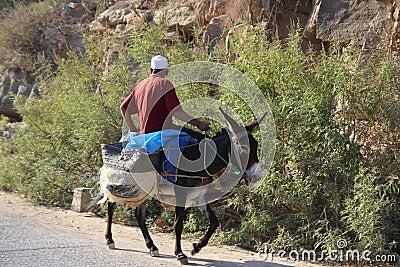 Man on donkey Editorial Photo