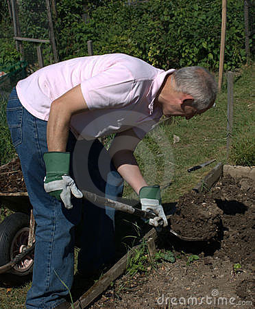 Man energetically digging the soil