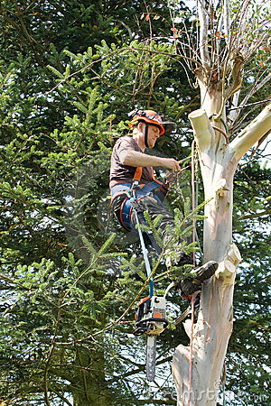 Free Man Engaged In Felling Tree Stock Photo - 6402670