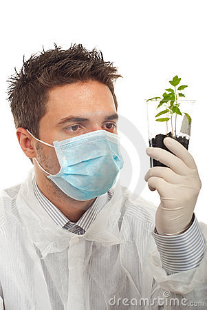 Man examine new tomato plants