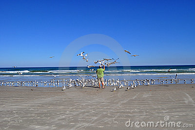Man feeding seagulls