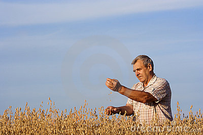 Man and  field of oats