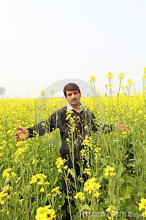 Man in flowering mustard field Editorial Image