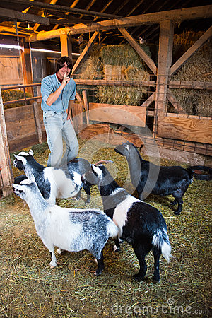 Man With Goats About to Play a Joke