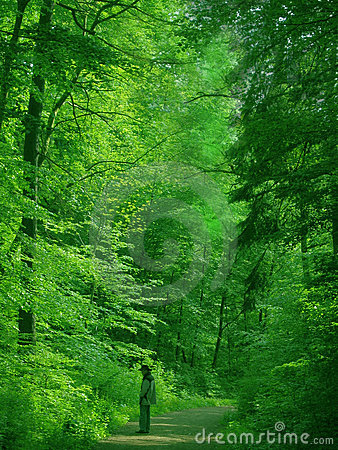 Man in a green forest