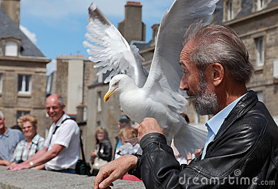 The man and the gull Editorial Stock Image