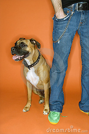Man with hand in pocket with Boxer dog.