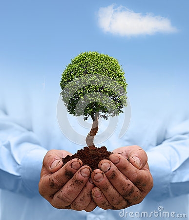 Man hands holding a green tree.