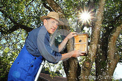Man hanging a nest box into a tree stock photo image 45138537