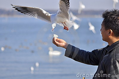 A man having fun feeding bird at a beach