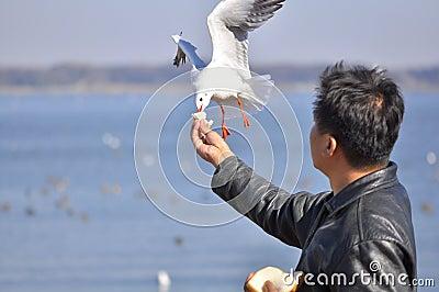 A man having fun feeding bird at a beach