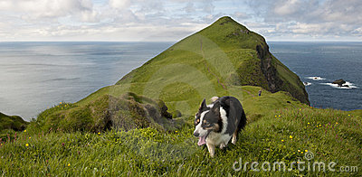Man and his dogs hiking on Mykines