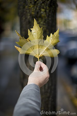 Man Holding Leaf Stock Photography - Image: 7836352