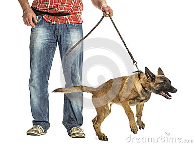 Man holding leash of aggressive Belgian Shepherd