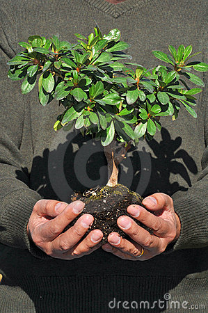 Man Holding Small Tree In Hands