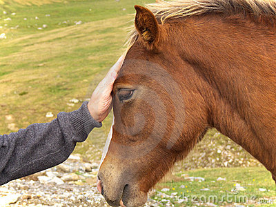 Man and horse friendship
