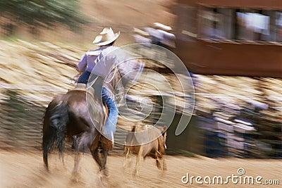 Man on horseback Editorial Stock Photo