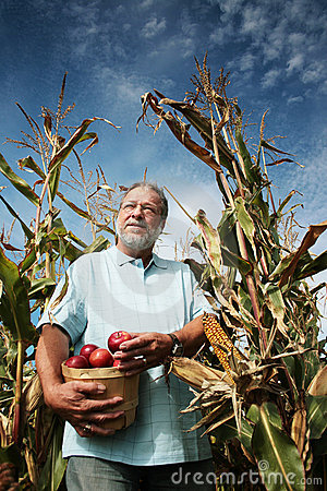 Free Man In Corn Field Stock Photography - 3288452