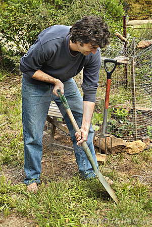 Free Man In Vegetable Patch Royalty Free Stock Photo - 310325