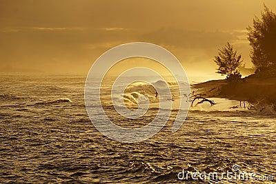 Man jumping into ocean