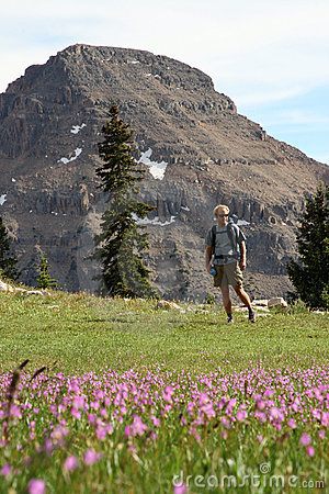 Man in mountain meadow