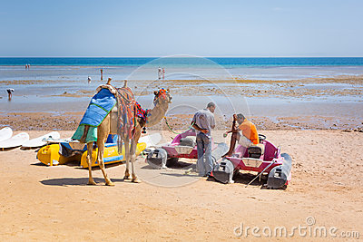 Man offering camel ride on the beach of Hurghada Editorial Stock Image