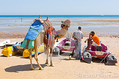 Man offering camel ride on the beach of Hurghada Editorial Photo