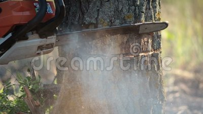 Man with orange chainsaw cutting dry tree stock video