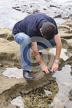 Man Photographing Sea Anemone