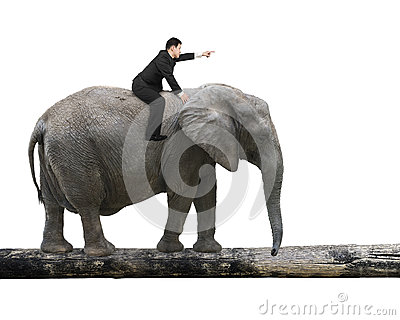 Man With Pointing Finger Riding Elephant Walking On Tree ...