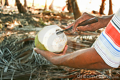 Man preparing coconut for eat