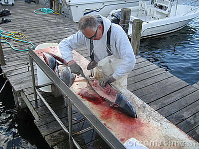 Man preparing a fresh fish