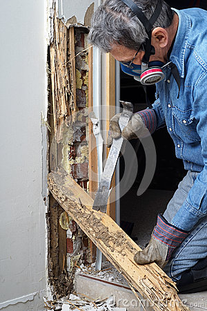 Free Man Removing Termite Damaged Wood From Wall Stock Photography - 38788122