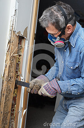 Free Man Removing Termite Damaged Wood From Wall Stock Images - 38788134